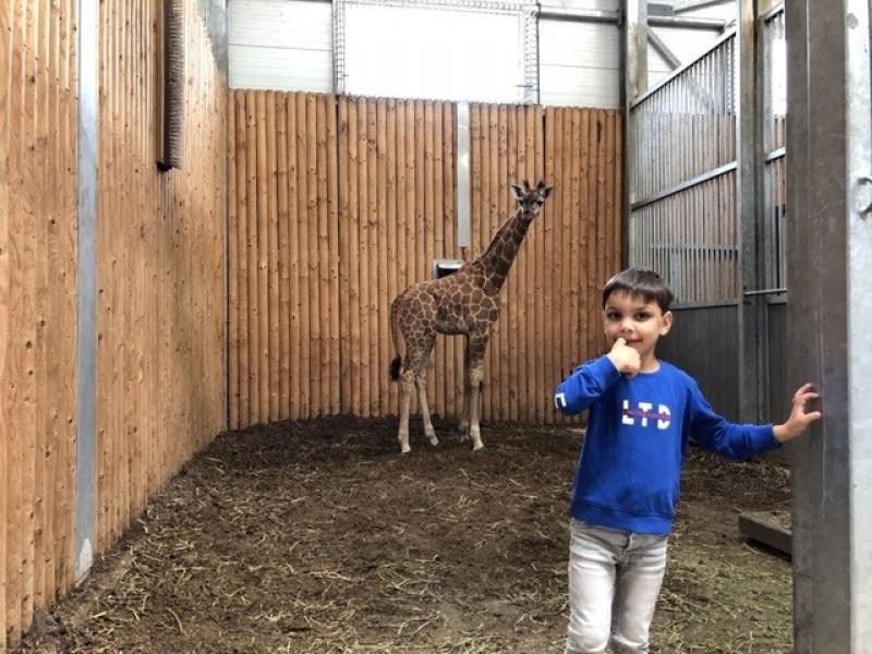 Tobias op bezoek bij de giraffen